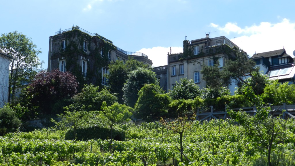 hidden gems of france vineyard
